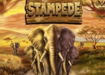 Stampede Online Slot Game