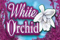 White Orchid online slot